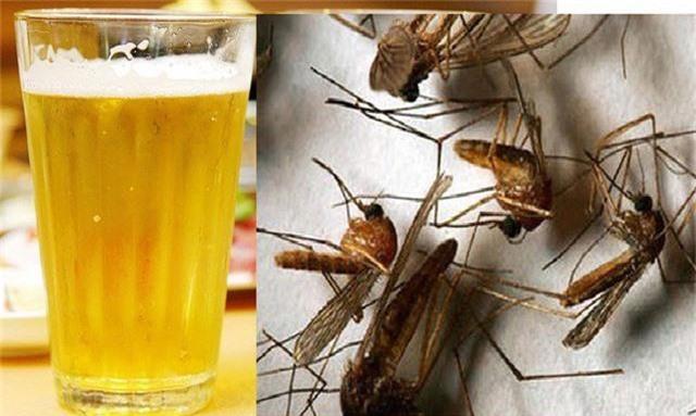 Bắt sạch đàn muỗi trong nhà chỉ với chút bia thừa trong nhà