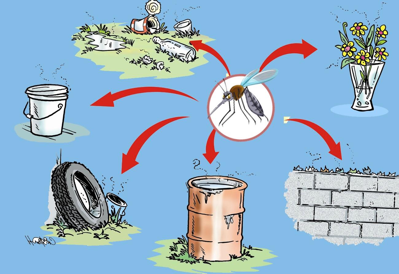 Cách diệt muỗi đơn giản bằng muối ít người biết