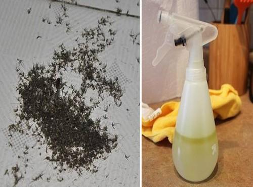 cách diệt muỗi vắt hiệu quả