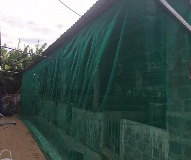 có nên dùng lưới chống muỗi cho chuồng trại
